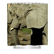 Two By Two Shower Curtain