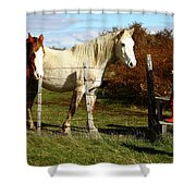 Two Children Admire Horses Shower Curtain