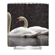 Two Christmas Swans A Swimming Shower Curtain