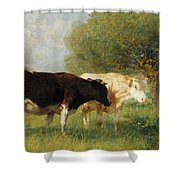 Two Cows In A Meadow Shower Curtain