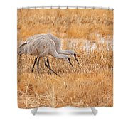 Two Cranes In The Field Shower Curtain