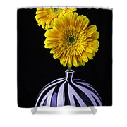 Two Daises In Striped Vase Shower Curtain
