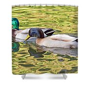 Two Drakes Shower Curtain