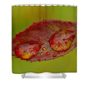 Two Droplets On A Leaf  Shower Curtain