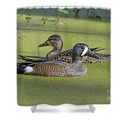 Two Ducks Passing By Shower Curtain