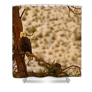 Two Eagles Hanging Out In Their Nest Shower Curtain