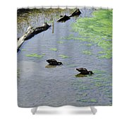 Two Eating Ducks Shower Curtain