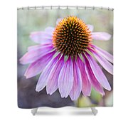 Two Echinacea Shower Curtain