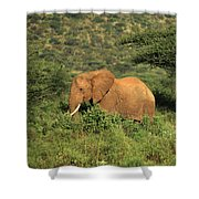 Two Elephants Walking Through The Grass Shower Curtain