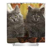 Two Fluffy Kittens Shower Curtain