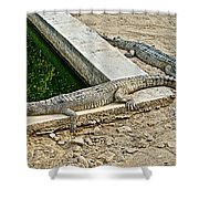 Two Gharial Crocodiles In Gharial Conservation Breeding Center In Chitwan Np-nepal   Shower Curtain