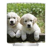 Two Golden Retriever Puppies Shower Curtain