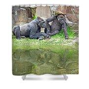 Two Gorillas Relaxing II Shower Curtain