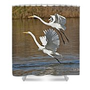 Two Greater Egrets  Shower Curtain