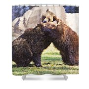 Two Grizzly Bears Ursus Arctos Play Fighting Shower Curtain
