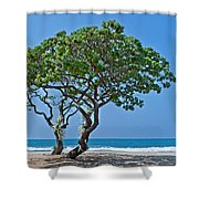 Two Heliotrope Trees On Tropical Beach Art Prints Shower Curtain