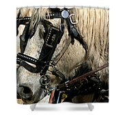 Two Horse Power Shower Curtain