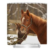 Two Horses In Winter Day Shower Curtain