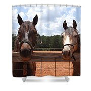 Two Horses Shower Curtain