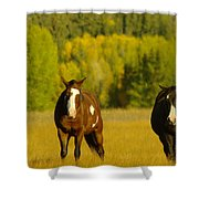 Two Horses Walking Along Shower Curtain