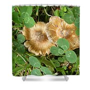 Two In Clover Shower Curtain