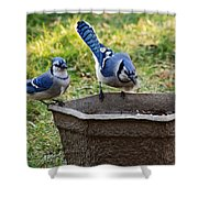 Two Jays Shower Curtain