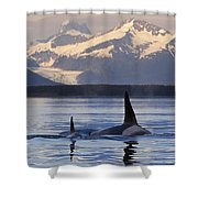 Two Killer Whales Surface In Lynn Canal Shower Curtain