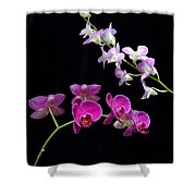 Two Kind Of Orchid Flower Shower Curtain