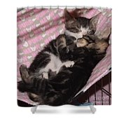 Two Kittens Sleeping Shower Curtain
