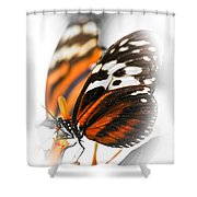 Two Large Tiger Butterflies Shower Curtain