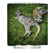 Two Lazy Kangaroos Lying Down Shower Curtain