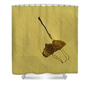 Two Leaves And One Stick At White Sands Shower Curtain