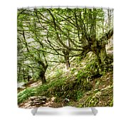 two little brothers Chasing Fairies in theBeech Forest on a summer day Shower Curtain