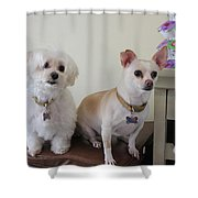Two Little Dog Shower Curtain