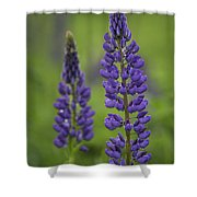 Two Lupine Shower Curtain