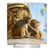 Two Macaques On Top Of Chorten Shower Curtain