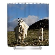 Two Mountain Goats Oreamnos Americanus Shower Curtain