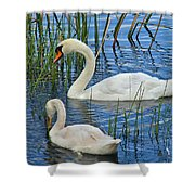 Two Mute Swans Shower Curtain