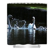 Two Mute Swans With Young Cygnus Olor Shower Curtain