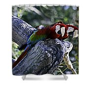 Two On A Branch Shower Curtain