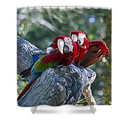 Two On A Branch Two Shower Curtain