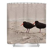 Two Oystercatchers Haematopus Unicolor On Beach Shower Curtain