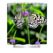 Two Paper Kite Or Rice Paper Or Large Tree Nymph Butterfly Also Known As Idea Leuconoe Shower Curtain