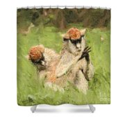Two Patas Monkeys Erythrocebus Patas Grooming Shower Curtain