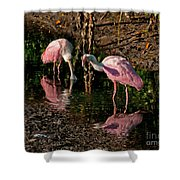 Two Pink Spoonbills Shower Curtain