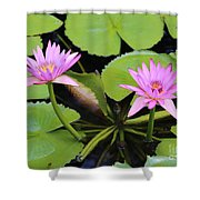 Two Pink Water Lilies Shower Curtain