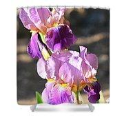 Two Purple Irises Shower Curtain