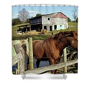 Two Quarter Horses In A Barnyard Shower Curtain