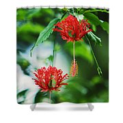 Two Red Hibiscus Shower Curtain