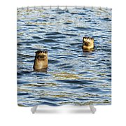 Two River Otters Shower Curtain